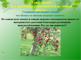 Старинная пословица гласит, что яблоко от яблони недалеко катится. На самом