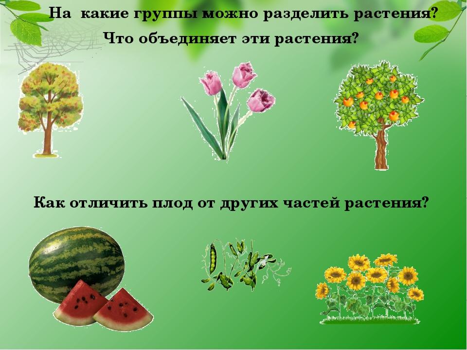 На какие группы можно разделить растения? Что объединяет эти растения? Как от...