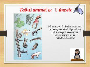 Өсімдіктердің өмірінде үйкеліс Шырмауықтың бір түрі (Лианы) Құлмақ (Хмель) Шы
