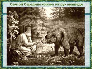 Святой Серафим кормит из рук медведя. Картина * *
