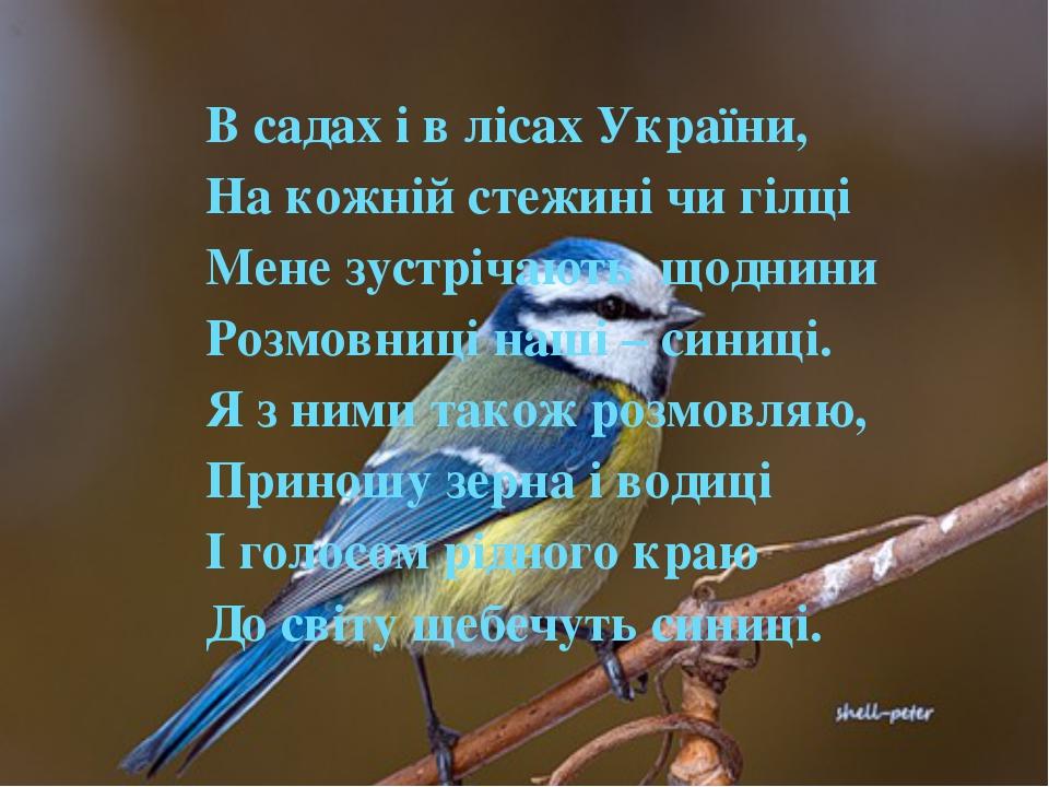 В садах і в лісах України, На кожній стежині чи гілці Мене зустрічають щодни...
