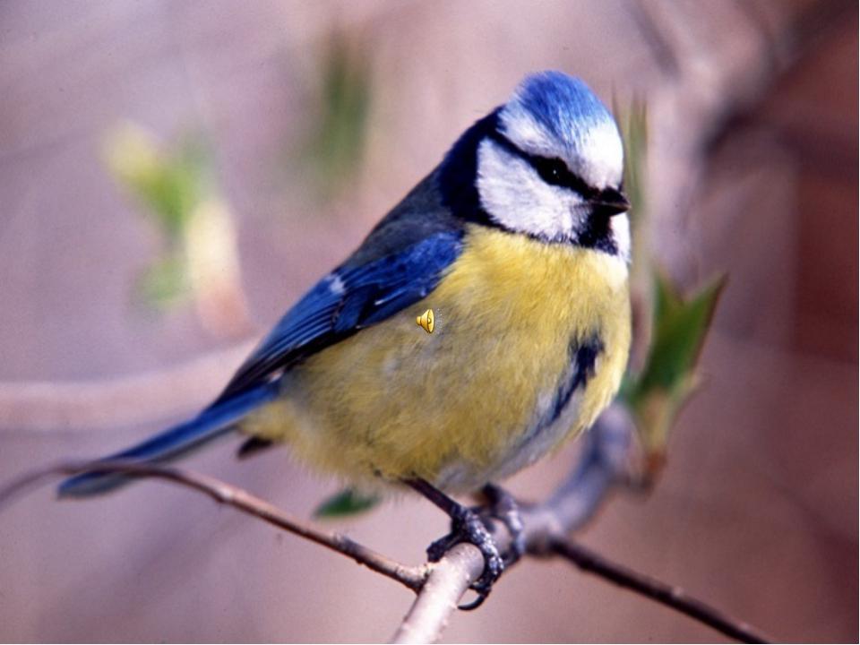 Не лякайте, друзі, пташок! Хай вони навкруг літають, Крила їх в промінні сонц...
