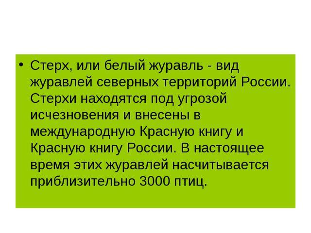 Стерх, или белый журавль - вид журавлей северных территорий России. Стерхи на...