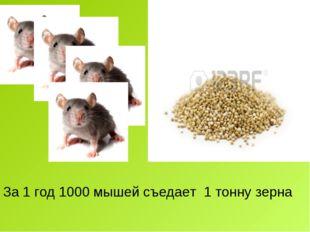 За 1 год 1000 мышей съедает 1 тонну зерна