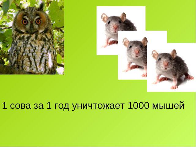 1 сова за 1 год уничтожает 1000 мышей
