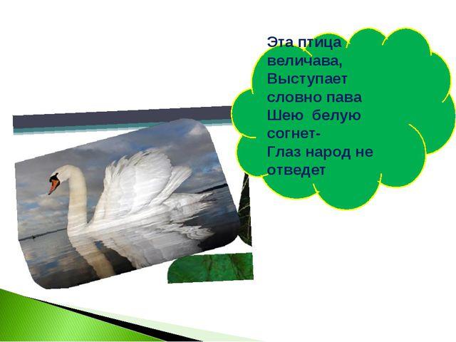 Эта птица величава, Выступает словно пава Шею белую согнет- Глаз народ не отв...