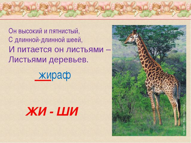 Он высокий и пятнистый, С длинной-длинной шеей, И питается он листьями – Лист...