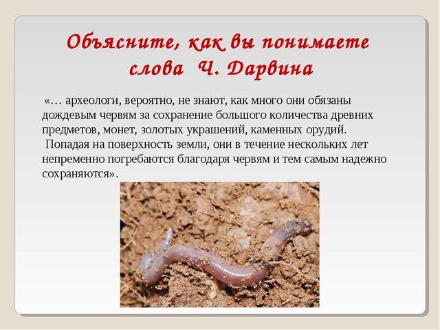 «… археологи, вероятно, не знают, как много они обязаны дождевым червям за с...