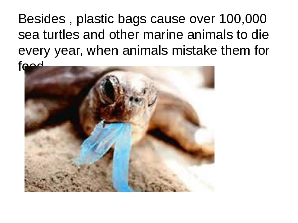 Besides , plastic bags cause over 100,000 sea turtles and other marine anima...
