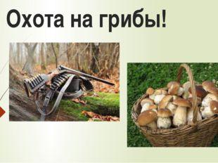Охота на грибы!
