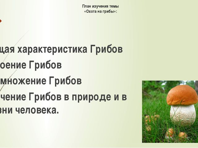План изучения темы «Охота на грибы»: Общая характеристика Грибов Строение Гри...