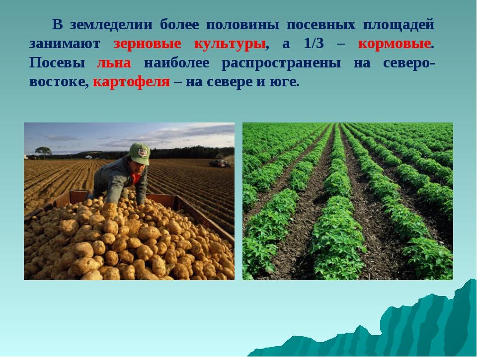 В земледелии более половины посевных площадей занимают зерновые культуры, а...