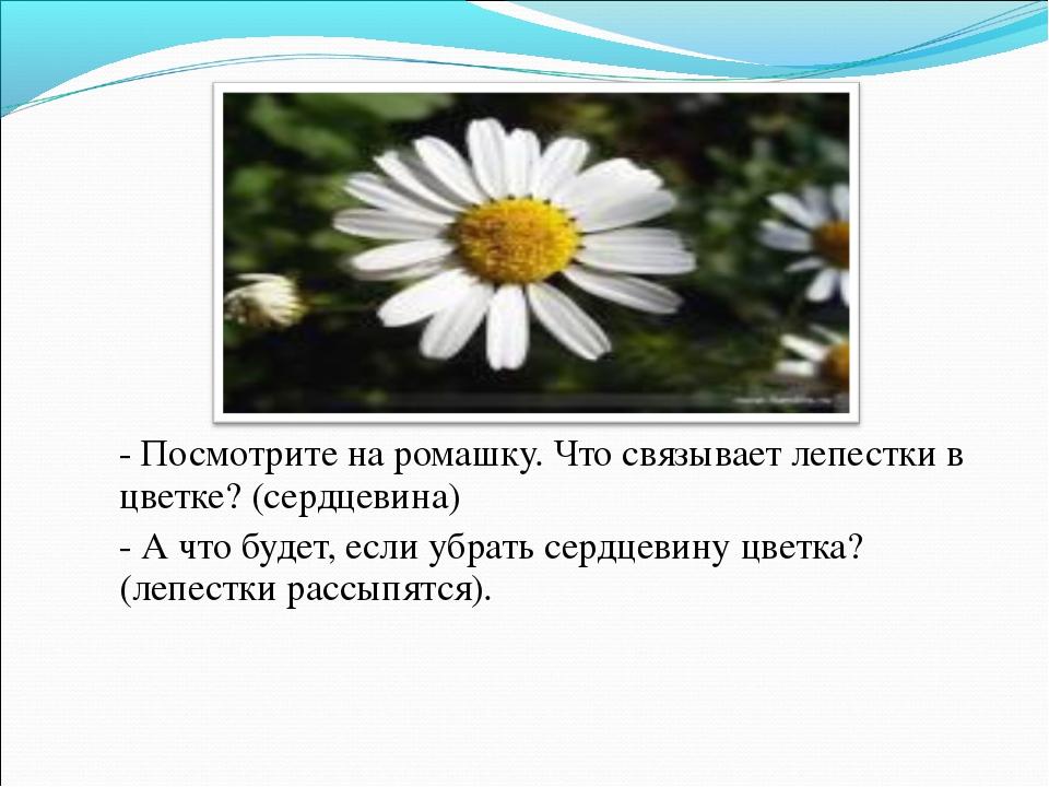 - Посмотрите на ромашку. Что связывает лепестки в цветке? (сердцевина) - А ч...