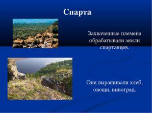 Спарта Захваченные племена обрабатывали земли спартанцев. Они выращивали хлеб
