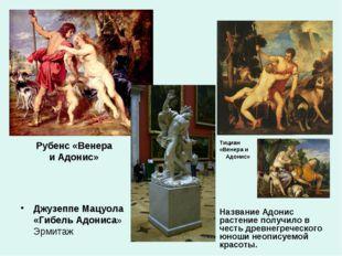Рубенс «Венера и Адонис» Джузеппе Мацуола «Гибель Адониса» Эрмитаж Тициан «Ве