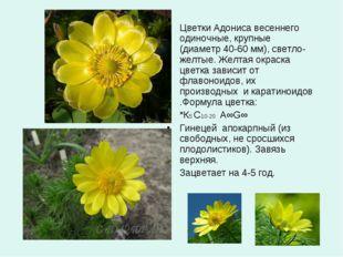 Цветки Адониса весеннего одиночные, крупные (диаметр 40-60 мм), светло-желтые