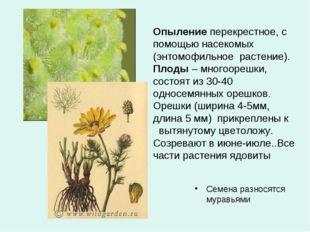 Опыление перекрестное, с помощью насекомых (энтомофильное растение). Плоды –