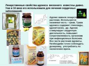 Лекарственные свойства адониса весеннего известны давно. Уже в 16 веке его ис