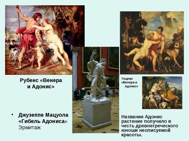 Рубенс «Венера и Адонис» Джузеппе Мацуола «Гибель Адониса» Эрмитаж Тициан «Ве...