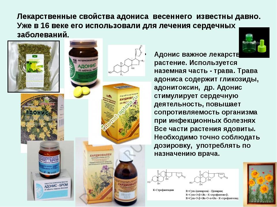 Лекарственные свойства адониса весеннего известны давно. Уже в 16 веке его ис...