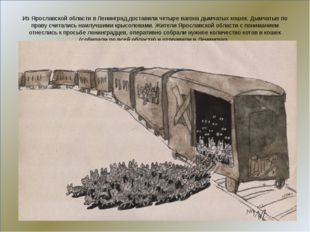 Из Ярославской области в Ленинград доставили четыре вагона дымчатых кошек. Д