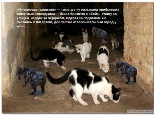 «Мяукающая дивизия» — так в шутку называли прибывших животных блокадники — б
