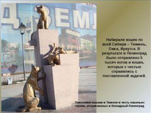 Набирали кошек по всей Сибири – Тюмень, Омск, Иркутск. В результате в Ленинг
