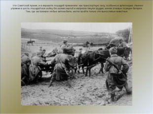 И в Советской Армии, и в вермахте лошадей применяли как транспортную силу, о