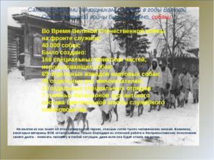 Самыми верными помощниками солдат в годы Великой Отечественной войны были, к