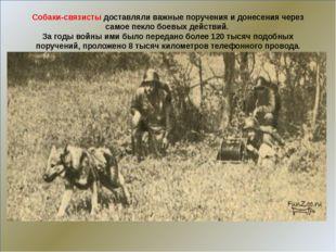Собаки-связисты доставляли важные поручения и донесения через самое пекло бо