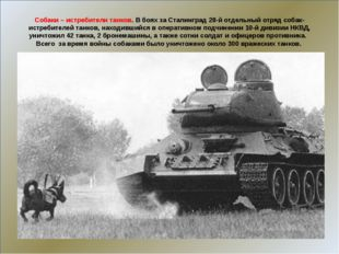 Собаки – истребители танков. В боях за Сталинград 28-й отдельный отряд собак