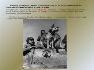 Все собаки, участвующие в Великой Отечественной войне, так или иначе помогал