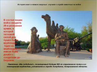 История знает и немало казусных случаев о службе животных на войне Памятник