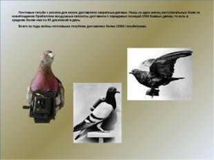 Почтовые голуби с риском для жизни доставляли секретные депеши. Лишь за один