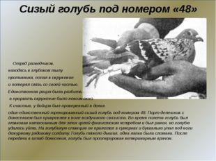 Сизый голубь под номером «48» Отряд разведчиков, находясь в глубоком тылу пр