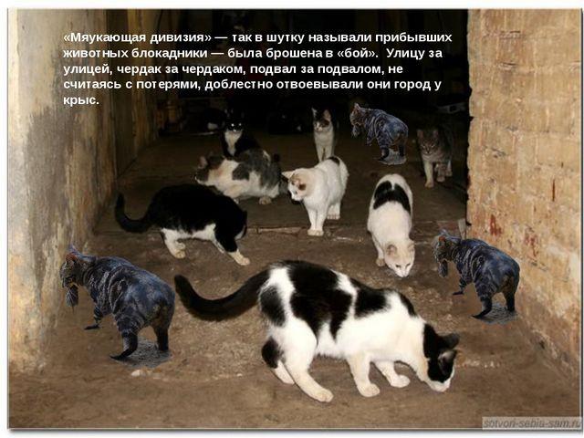 «Мяукающая дивизия» — так в шутку называли прибывших животных блокадники — б...