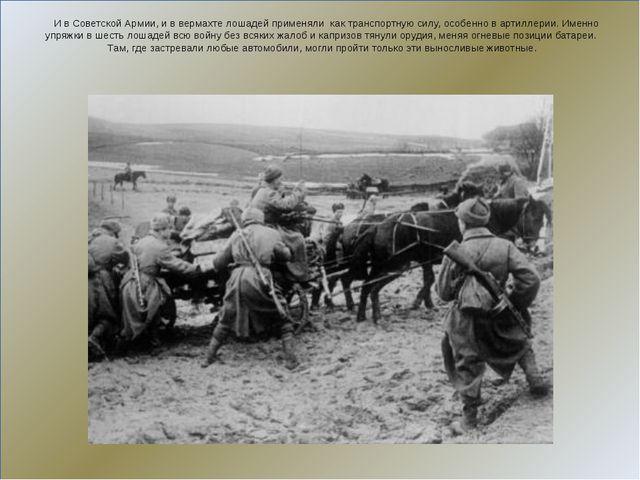 И в Советской Армии, и в вермахте лошадей применяли как транспортную силу, о...