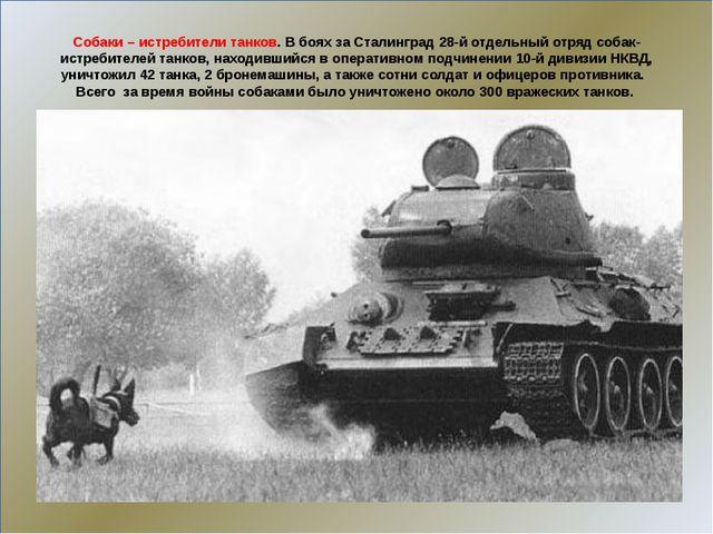Собаки – истребители танков. В боях за Сталинград 28-й отдельный отряд собак...