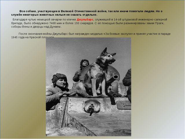 Все собаки, участвующие в Великой Отечественной войне, так или иначе помогал...