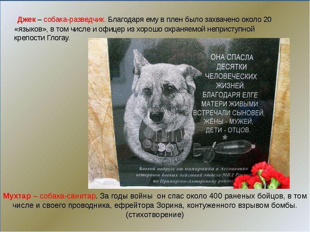 Мухтар– собака-санитар. За годы войны он спас около 400 раненых бойцов, в...