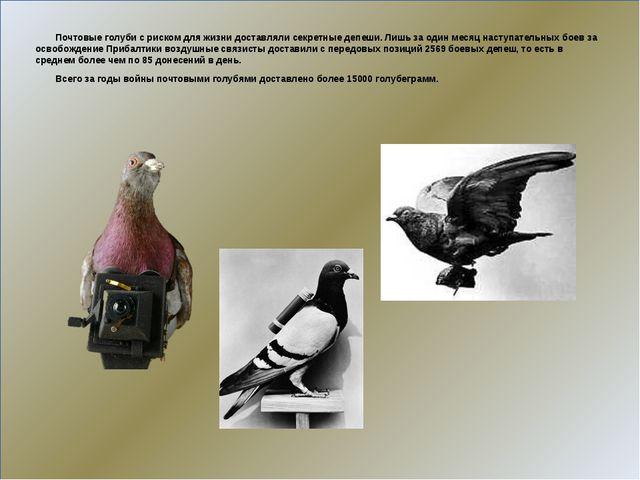 Почтовые голуби с риском для жизни доставляли секретные депеши. Лишь за один...