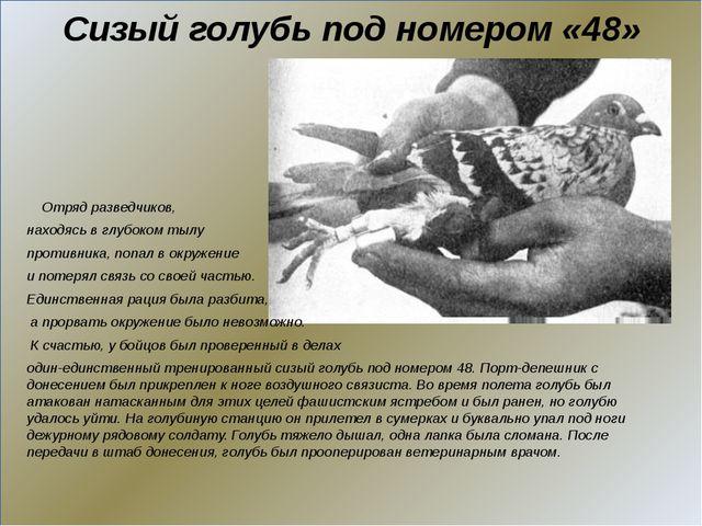 Сизый голубь под номером «48» Отряд разведчиков, находясь в глубоком тылу пр...