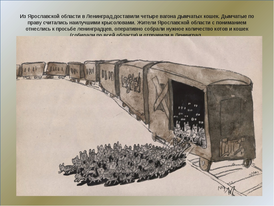 Из Ярославской области в Ленинград доставили четыре вагона дымчатых кошек. Д...
