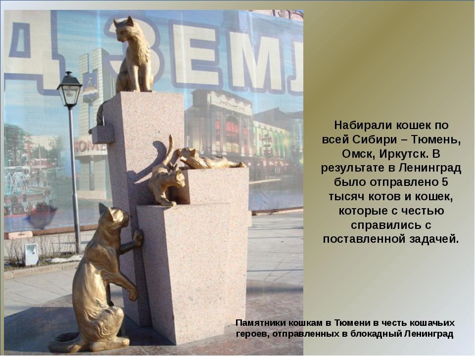 Набирали кошек по всей Сибири – Тюмень, Омск, Иркутск. В результате в Ленинг...
