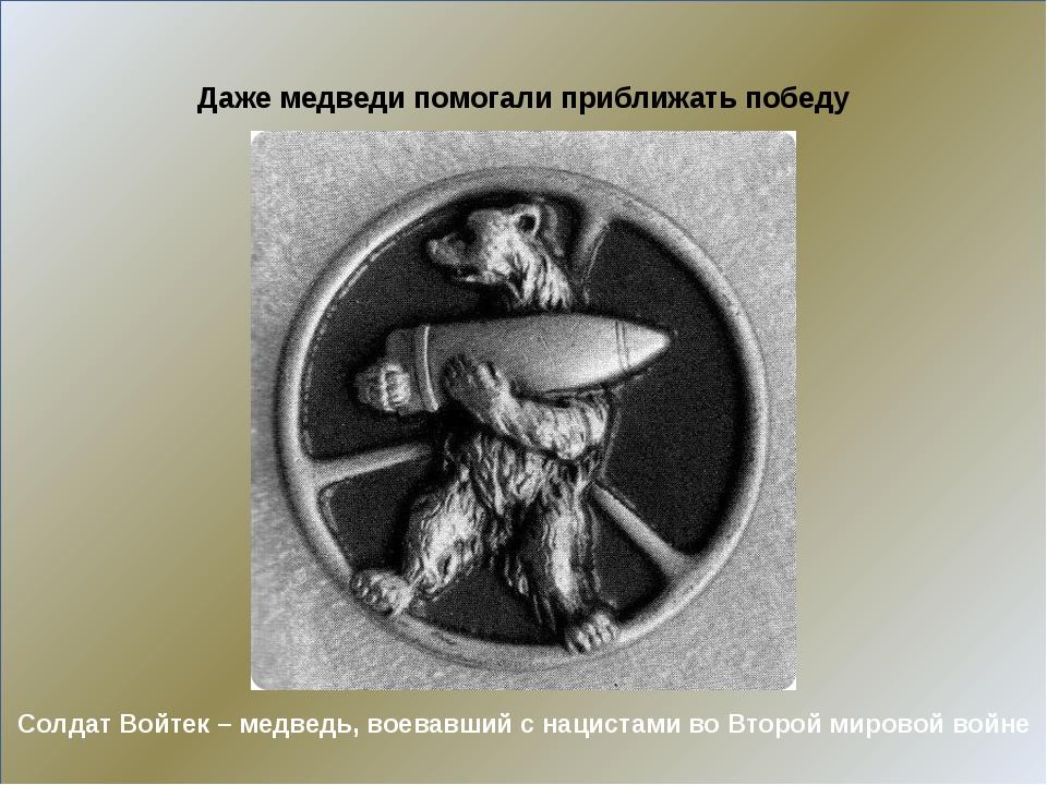 Солдат Войтек – медведь, воевавший с нацистами во Второй мировой войне Даже...