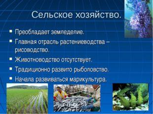 Сельское хозяйство. Преобладает земледелие. Главная отрасль растениеводства –