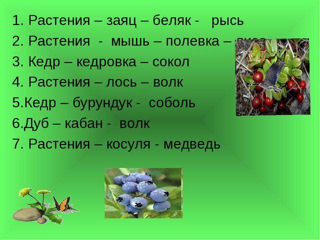 1. Растения – заяц – беляк - рысь 2. Растения - мышь – полевка – лиса 3. Кедр...