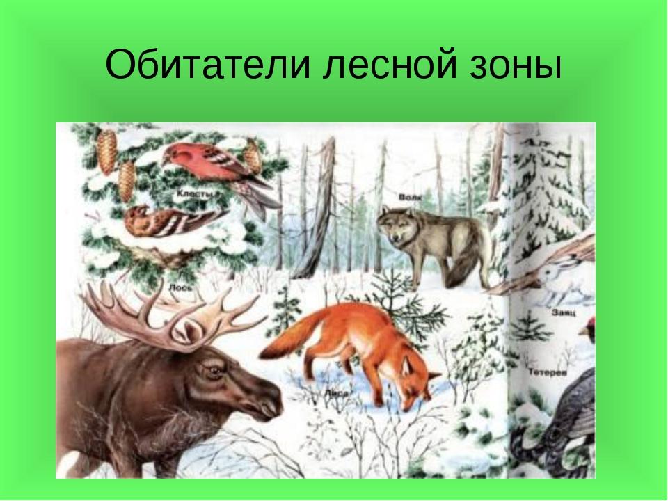Обитатели лесной зоны