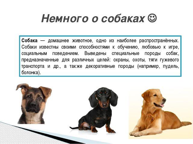 Немного о собаках  Собака — домашнее животное, одно из наиболее распростран...