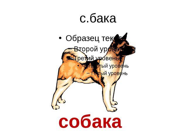 с.бака собака